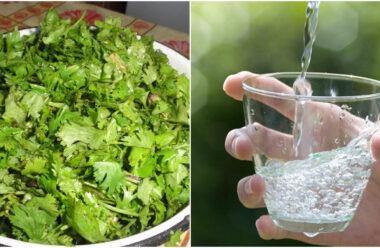 Простий метод за допомогою цієї трави, очистити воду від шкідливих елементів
