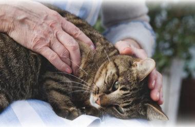 Чому кішка лягає на хворе місце людини, та що це означає?
