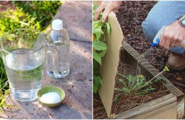 За допомогою цього засобу, можна позбутися бур'янів та шкідників на городі