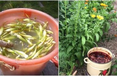 Натуральні засоби, які допоможуть позбутися шкідників на городі