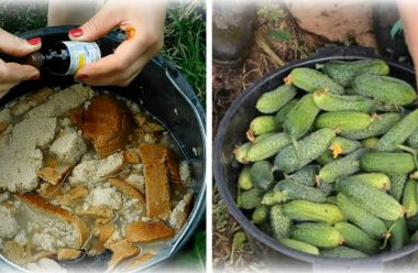 Як за допомогою хліба підживити огірки, щоб вони гарно родили