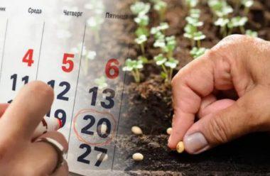 Місячний календар на липень 2020. Сприятливі дні, щоб був гарний врожай