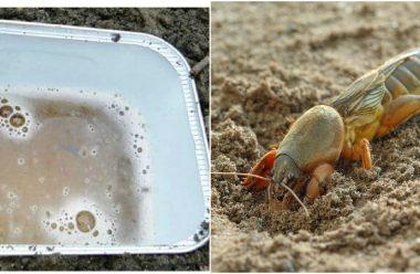 Ефективний спосіб боротьби з капустянкою без хімії, щоб вберегти врожай