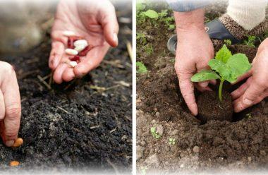 Що можна посадити на городі в липні, щоб встигнути зібрати урожай