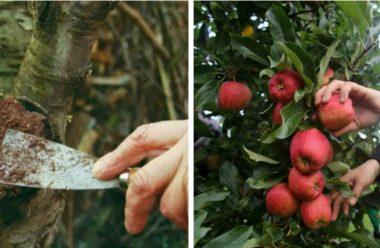 Перевірені методи, які захистять фруктові дерева від хвороб та шкідників
