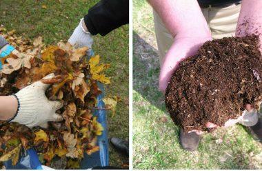 Ефективне та натуральне добриво з листя. Не викидайте, та не спалюйте його