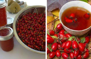 Шипшина — рецепти варення, чаю та настою, для зміцнення імунітету