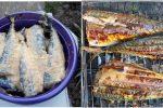 Скумбрія на мангалі – це дуже смачна та ароматна страва. А все в особливому маринаді