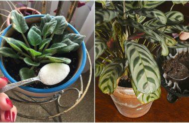 Чим краще удобрити кімнатні рослини, щоб вони гарно росли та не хворіли