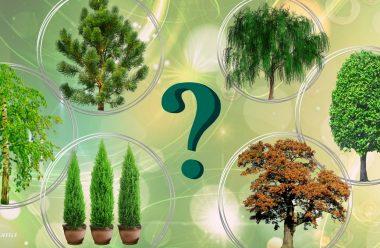 Чому не можна садити ці дерева поруч з будинком, та що вони символізують