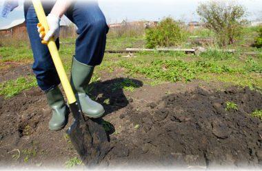 Готуємо грядки для майбутнього врожаю. Що слід зробити до перших заморозків
