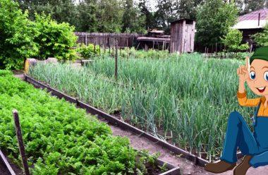 Як правильно підготовити грядки для гарного врожаю у 2021 році. Городникам на замітку