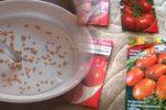 Чому насіння помідорів слід купляти в січні, та чому це так важливо, щоб мати гарний врожай