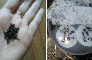 Дієві поради, як перевірити схожість насіння самостійно. Варто зробити перед початком висівання