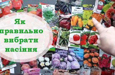 Як правильно вибрати насіння, щоб мало гарну схожість та давало великий врожай