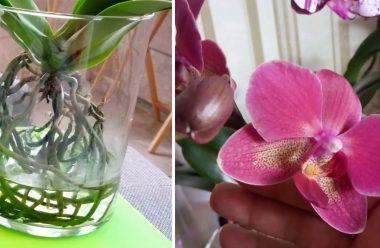 Орхідеї у воді: гарний спосіб вирощування. Жінкам на замітку