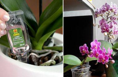 5 дієвих способів, щоб змусити орхідею квітнути цілий рік