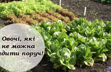 Ніколи не садіть ці овочі поряд один з одним, щоб не втратити врожай
