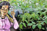 Головні правила, яких слід дотримуватися під час вирощування розсади. Щоб була міцна та гарна