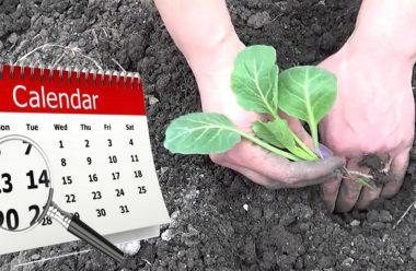 Посадочний календар на травень. Що та коли краще садити, щоб мати гарний врожай