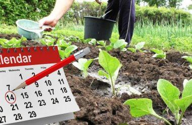 Місячний посівний календар на червень 2021 року. Коли краще садити, щоб мати гарний врожай