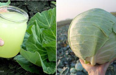 Полийте цим розчином свою капусту, щоб качани були великі та міцні
