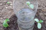 Простий та ефективний крапельний полив за допомогою пластикової пляшки. Городникам на замітку
