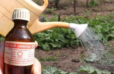 Ефективний засіб, який захистить ваші рослини від хвороб та шкідників