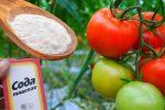 Сода — це незамінний помічник для кожного городника. Допомагає збільшити врожай в рази