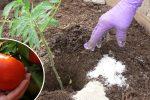Чим краще підгодувати розсаду томатів під час посадки її у відкритий ґрунт