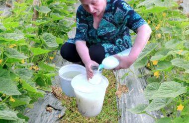 Еліксир для швидкого зростання для огірків. Як правильно застосовувати, щоб збирати врожай відрами