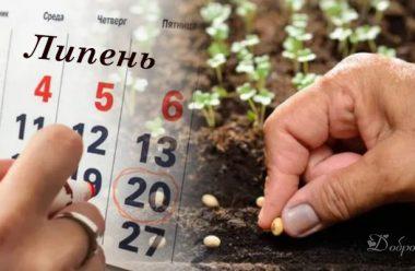 Місячний посівний календар на липень. В які дні краще садити, щоб гарно вродило