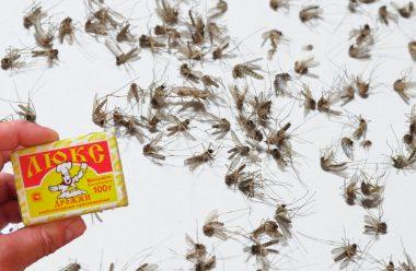 Завдяки дріжджам я забула про комарів. Як правильно приготувати приманку