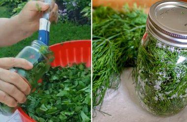 Чотири кращі способи заготівлі зелені на зиму. Не втрачає свій смак та аромат